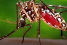 Dengue fever its causes and symptom