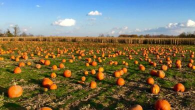 Amazing Health Benefits of Pumpkin You Need To Know